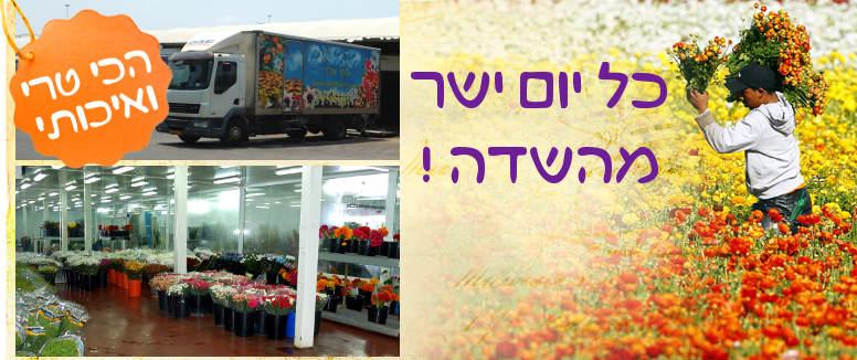 משלוחי פרחים הכי טריים ואיכותיים בתל אביב והמרכז